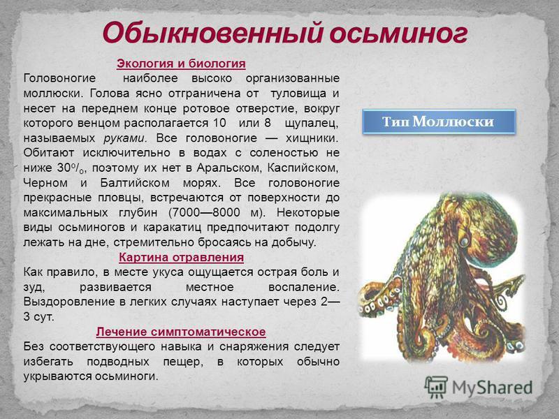 Экология и биология Головоногие наиболее высоко организованные моллюски. Голова ясно отграничена от туловища и несет на переднем конце ротовое отверстие, вокруг которого венцом располагается 10 или 8 щупалец, называемых руками. Все головоногие хищник