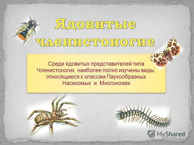 Среди ядовитых представителей типа Членистоногих наиболее полно изучены виды, относящиеся к классам Паукообразных Насекомых и Многоножек Среди ядовитых представителей типа Членистоногих наиболее полно изучены виды, относящиеся к классам Паукообразных