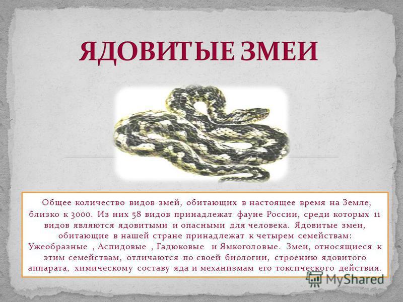 Общее количество видов змей, обитающих в настоящее время на Земле, близко к 3000. Из них 58 видов принадлежат фауне России, среди которых 11 видов являются ядовитыми и опасными для человека. Ядовитые змеи, обитающие в нашей стране принадлежат к четыр