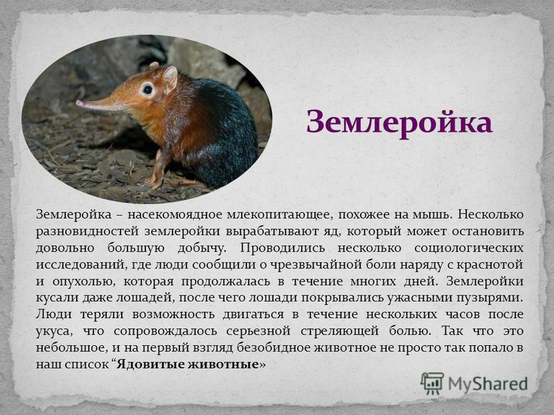 Землеройка – насекомоядное млекопитающее, похожее на мышь. Несколько разновидностей землеройки вырабатывают яд, который может остановить довольно большую добычу. Проводились несколько социологических исследований, где люди сообщили о чрезвычайной бол