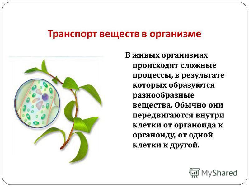 Транспорт веществ в организме В живых организмах происходят сложные процессы, в результате которых образуются разнообразные вещества. Обычно они передвигаются внутри клетки от органоида к органоиду, от одной клетки к другой.