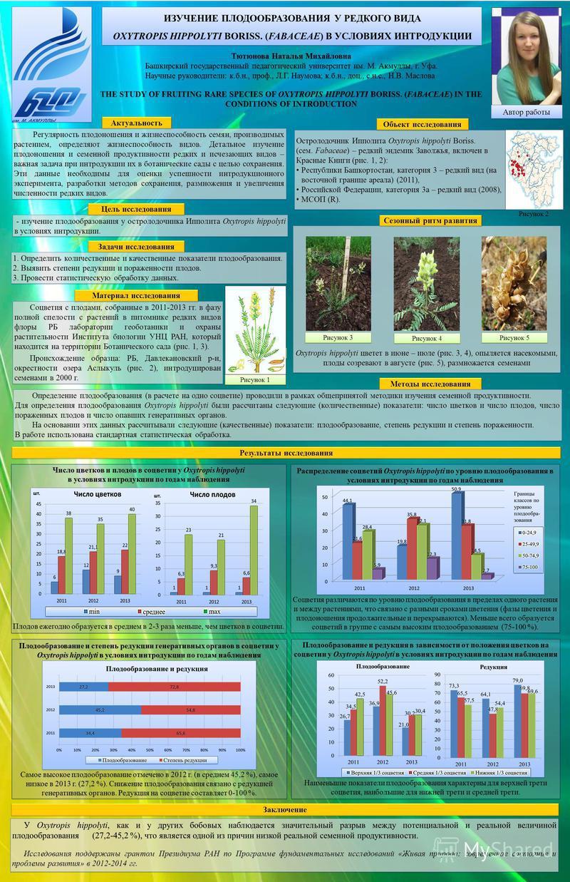 Распределение соцветий Oxytropis hippolyti по уровню плодообразования в условиях интродукции по годам наблюдения Соцветия различаются по уровню плодообразования в пределах одного растения и между растениями, что связано с разными сроками цветения (фа