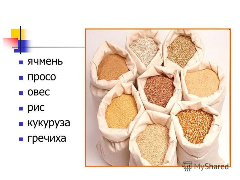 ячмень просо овес рис кукуруза гречиха