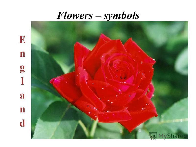 Flowers – symbols