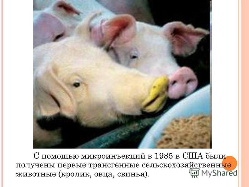 С помощью микроинъекций в 1985 в США были получены первые трансгенные сельскохозяйственные животные (кролик, овца, свинья).