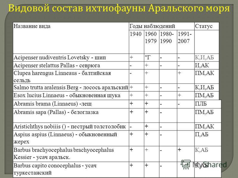 Видовой состав ихтиофауны Аральского моря Название видаГоды наблюденийСтатус 19401960 1979 1980- 1990 1991- 2007 Acipenser nudiventris Lovetsky - шип+