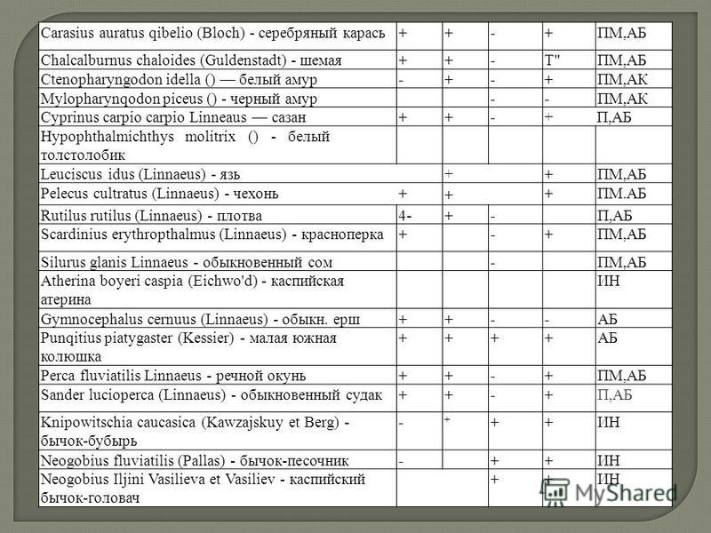 Carasius auratus qibelio (Bloch) - серебряный карась++-+ПМ,АБ Chalcalburnus chaloides (Guldenstadt) - шемая++-T