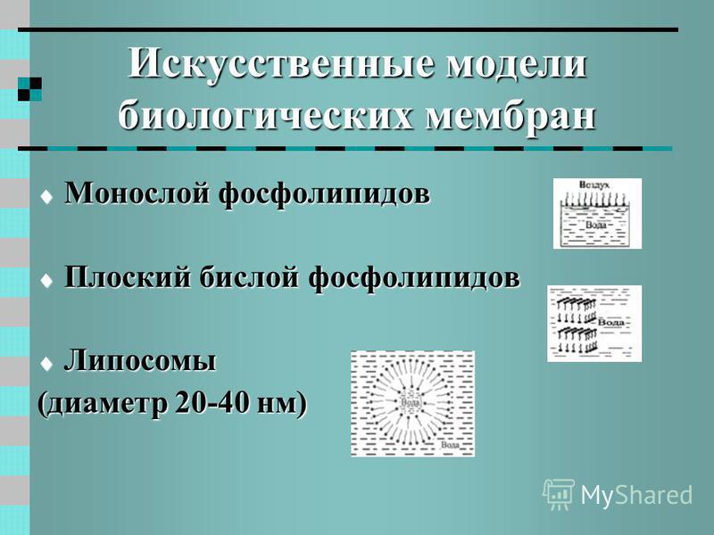Искусственные модели биологических мембран Монослой фосфолипидов Монослой фосфолипидов Плоский бислой фосфолипидов Плоский бислой фосфолипидов Липосомы Липосомы (диаметр 20-40 нм)