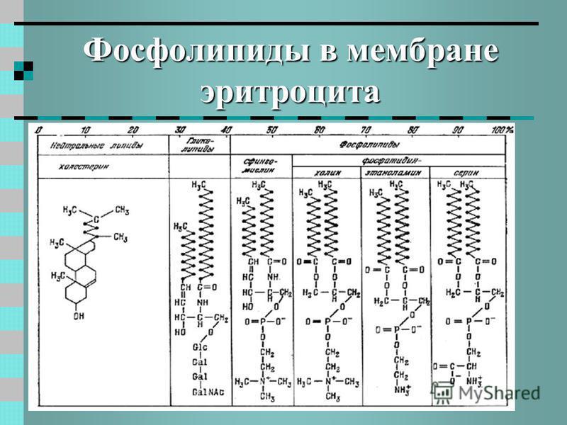 Фосфолипиды в мембране эритроцита