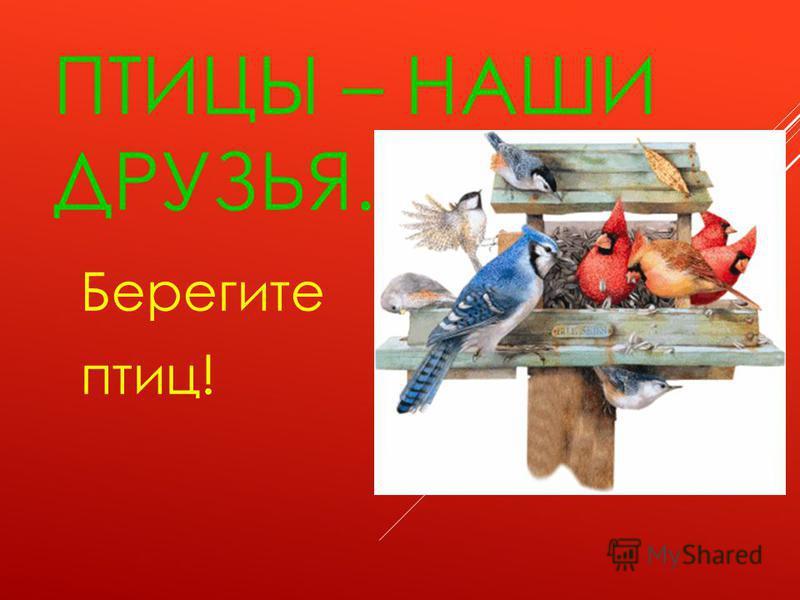 П Т И Ц Ы Подкармливайте птиц зимой!