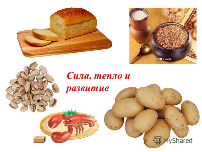 Пища – источник жизни Энергия и рост