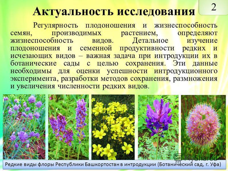 Актуальность исследования Регулярность плодоношения и жизнеспособность семян, производимых растением, определяют жизнеспособность видов. Детальное изучение плодоношения и семенной продуктивности редких и исчезающих видов – важная задача при интродукц