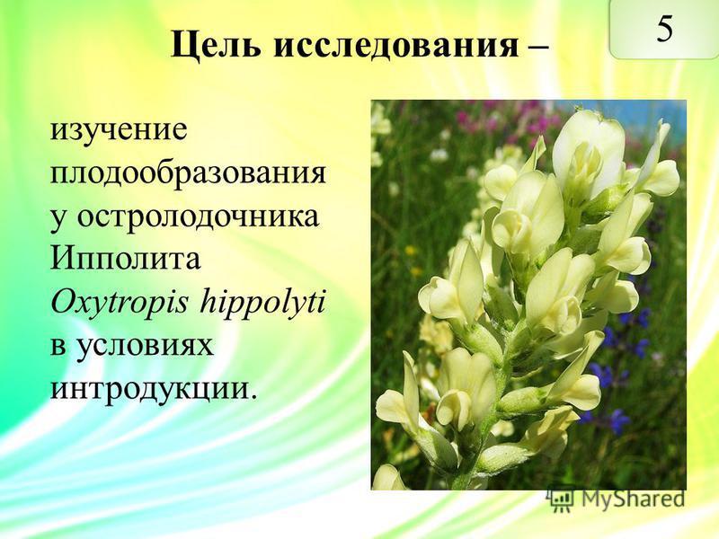 Цель исследования – изучение плодообразования у остролодочника Ипполита Oxytropis hippolyti в условиях интродукции.