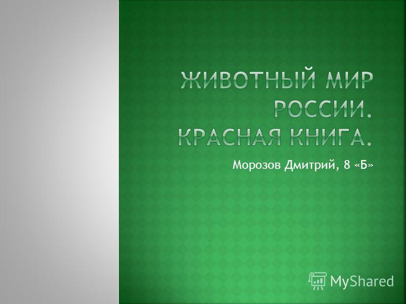 Морозов Дмитрий, 8 «Б»