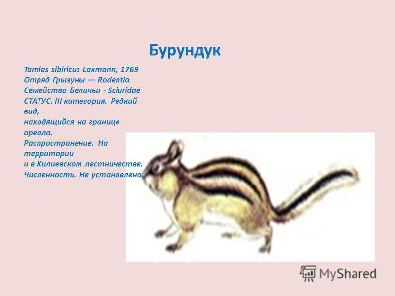 Бурундук Tamias sibiricus Laxmann, 1769 Отряд Грызуны Rodentia Семейство Беличьи - Sciuridae СТАТУС. III категория. Редкий вид, находящийся на границе ареала. Распространение. На территории и в Килиевском лесничестве. Численность. Не установлена.