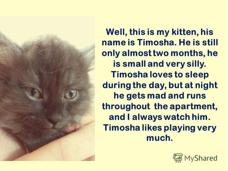 Well, this is my kitten, his name is Timosha. He is still only almost two months, he is small and very silly. Timosha loves to sleep during the day, but at night he gets mad and runs throughout the apartment, and I always watch him. Timosha likes pla