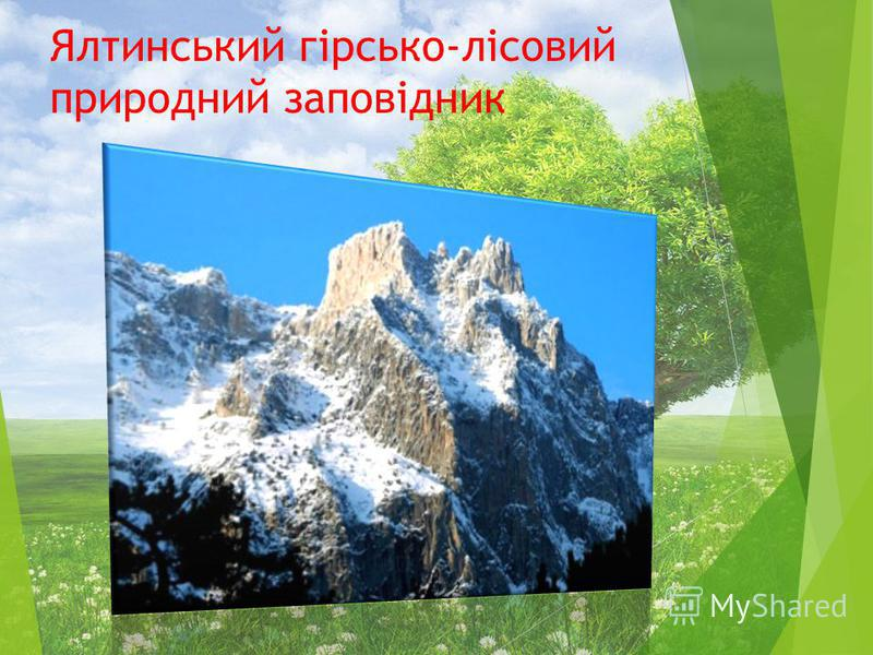 Ялтинський гірсько-лісовий природний заповідник