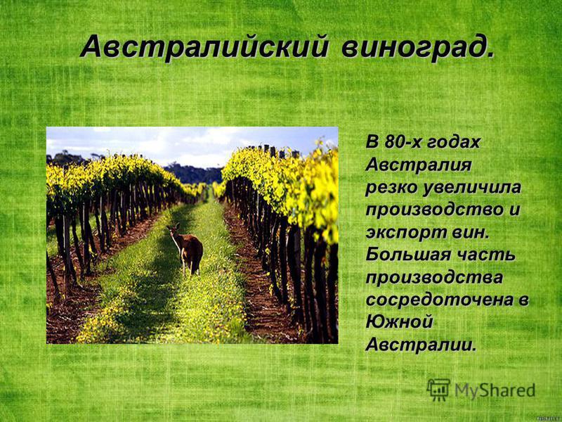 Австралийский виноград. В 80-х годах Австралия резко увеличила производство и экспорт вин. Большая часть производства сосредоточена в Южной Австралии.