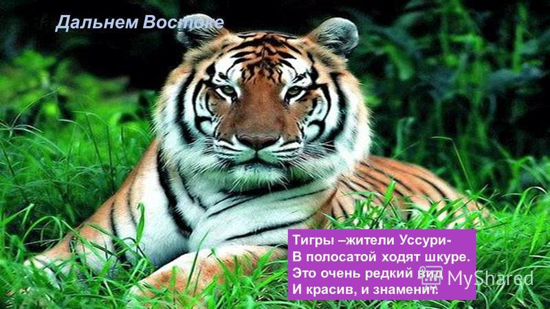 Уральские горы По каменным плитам Ведут за собой нас В страну малахита. В страну, где не счесть Драгоценных камней, В страну работящих И добрых людей.