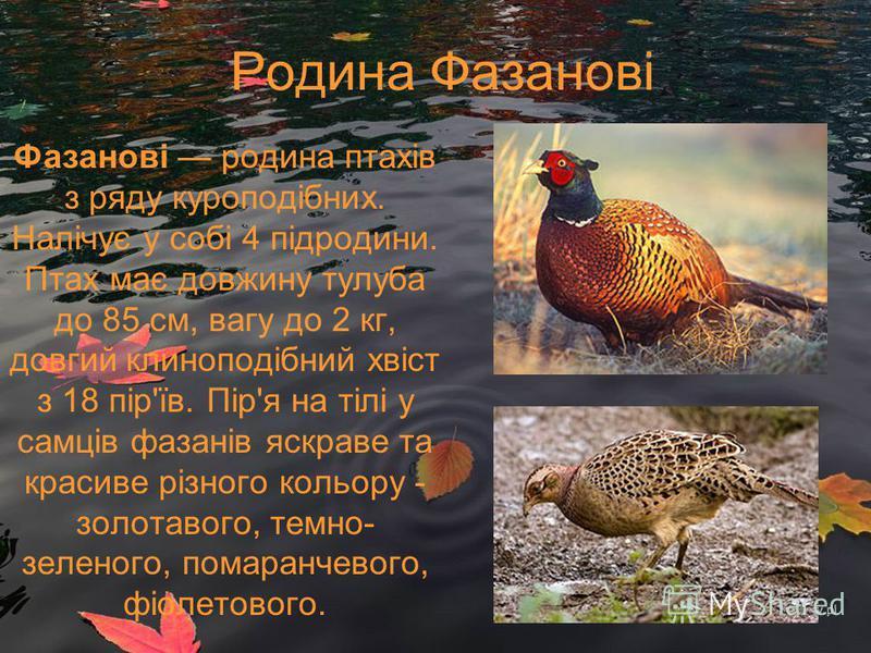 Родина Фазанові Фазанові родина птахів з ряду куроподібних. Налічує у собі 4 підродини. Птах має довжину тулуба до 85 см, вагу до 2 кг, довгий клиноподібний хвіст з 18 пір'їв. Пір'я на тілі у самців фазанів яскраве та красиве різного кольору - золота