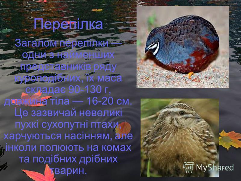 Перепілка Загалом перепілки одни з найменших представників ряду куроподібних, їх маса складає 90-130 г, довжина тіла 16-20 см. Це зазвичай невеликі пухкі сухопутні птахи, харчуються насінням, але інколи полюють на комах та подібних дрібних тварин.