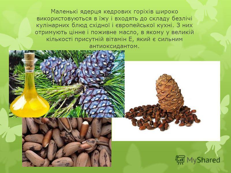 Маленькі ядерця кедрових горіхів широко використовуються в їжу і входять до складу безлічі кулінарних блюд східної і європейської кухні. З них отримують цінне і поживне масло, в якому у великій кількості присутній вітамін Е, який є сильним антиоксида