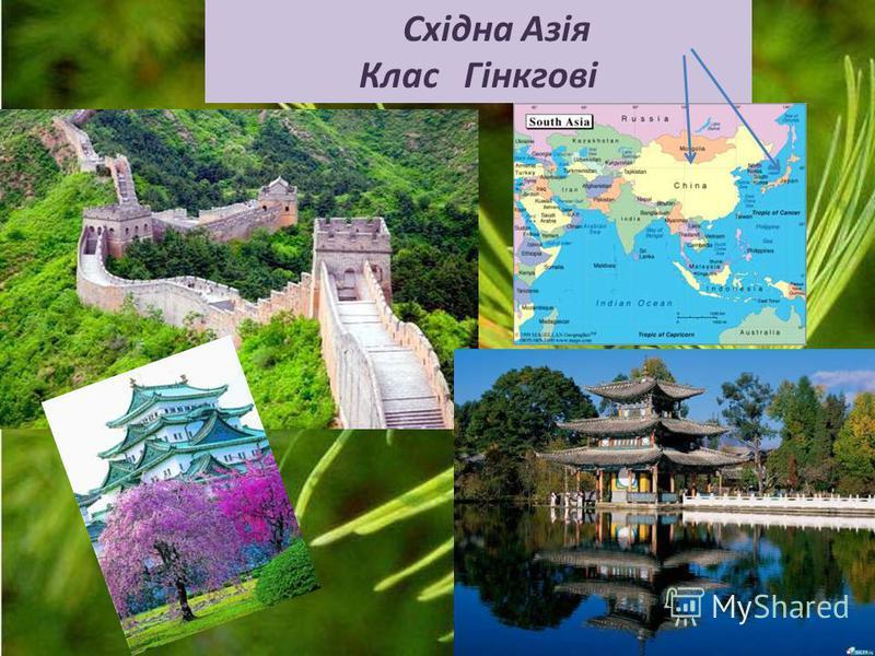 Східна Азія Клас Гінкгові