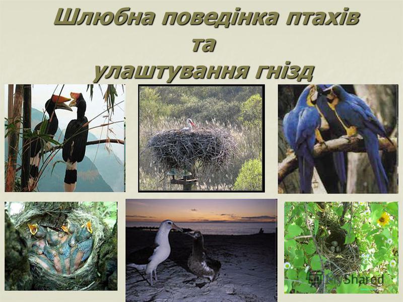 Шлюбна поведінка птахів та улаштування гнізд Шлюбна поведінка птахів та улаштування гнізд