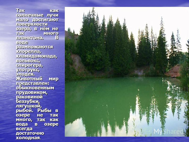 Так как солнечные лучи мало достигают поверхности озера, в нём не так много планктона. В воде размножаются хлорелла, хламидомонада, вольвокс, спирогира, улотрукс, элодея. Животный мир представлен: обыкновенным прудовиком, раковиной беззубки, лягушкой
