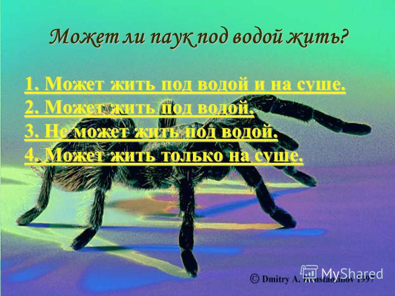 Знаете ли вы? Пауки не переносят сырости. Если вечером пауки плетут паутину и бегают по ней, значит, на следующий день будет хорошая погода. Есть пауки-бродяги, которые появляются ранней весной и начинают свою охоту за пробудившимися от сна насекомым
