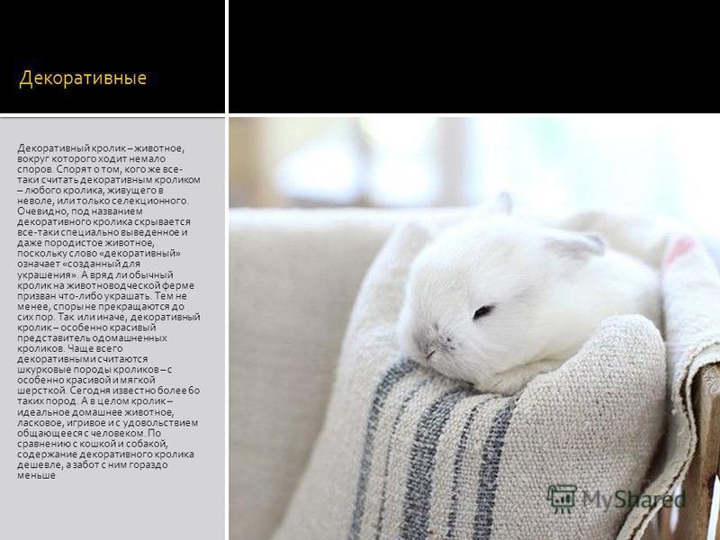 Декоративные Декоративный кролик – животное, вокруг которого ходит немало споров. Спорят о том, кого же все- таки считать декоративным кроликом – любого кролика, живущего в неволе, или только селекционного. Очевидно, под названием декоративного кроли