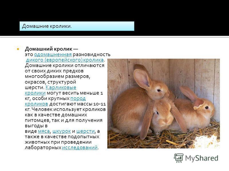 Домашний кролик это одомашненная разновидность дикого (европейского) кролика. Домашние кролики отличаются от своих диких предков многообразием размеров, окрасов, структурой шерсти. Карликовые кролики могут весить меньше 1 кг, особи крупных пород крол