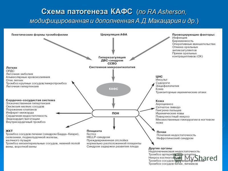 Схема патогенеза КАФС (по RA Asherson, модифицированная и дополненная А.Д.Макацария и др.)