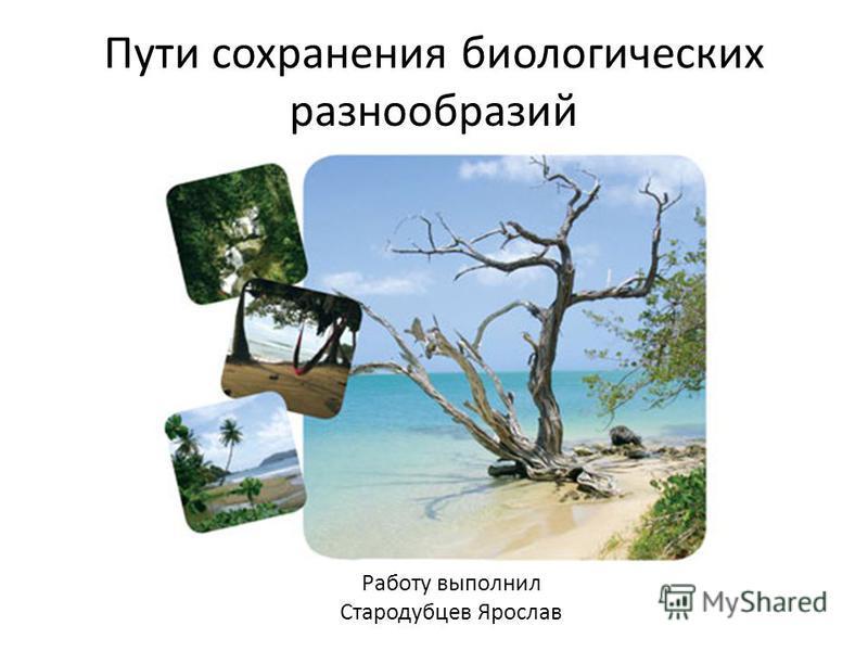 Пути сохранения биологических разнообразий Работу выполнил Стародубцев Ярослав