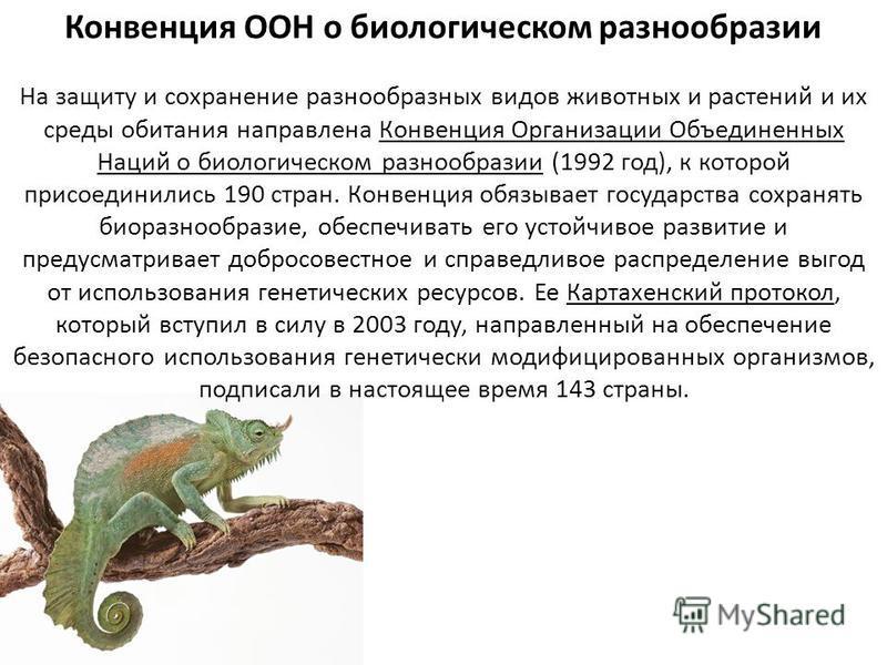 Конвенция ООН о биологическом разнообразии На защиту и сохранение разнообразных видов животных и растений и их среды обитания направлена Конвенция Организации Объединенных Наций о биологическом разнообразии (1992 год), к которой присоединились 190 ст