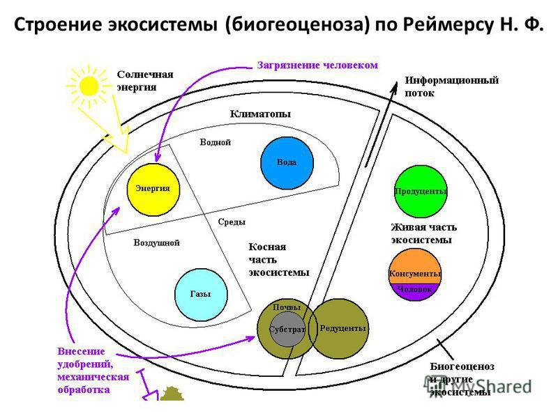 Строение экосистемы (биогеоценоза) по Реймерсу Н. Ф.