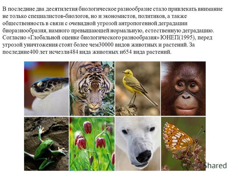 В последние два десятилетия биологическое разнообразие стало привлекать внимание не только специалистов-биологов, но и экономистов, политиков, а также общественность в связи с очевидной угрозой антропогенной деградации биоразнообразия, намного превыш