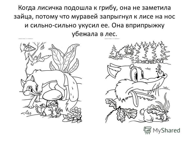Когда лисичка подошла к грибу, она не заметила зайца, потому что муравей запрыгнул к лисе на нос и сильно-сильно укусил ее. Она вприпрыжку убежала в лес.