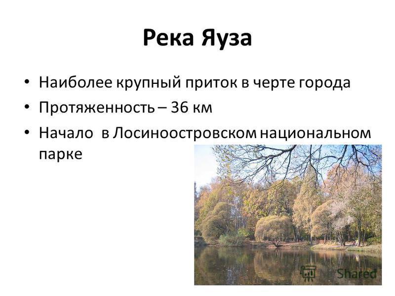 Река Яуза Наиболее крупный приток в черте города Протяженность – 36 км Начало в Лосиноостровском национальном парке