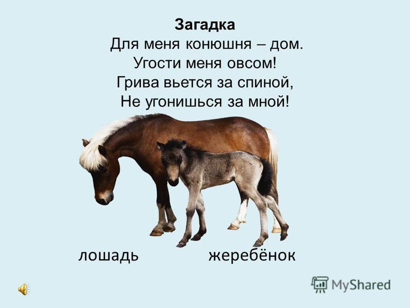 Загадка Голодная – мычит, сытая – жуёт, Всем ребятам, молоко даёт. корова телёнок