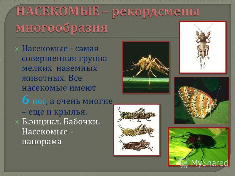Насекомые - самая совершенная группа мелких наземных животных. Все насекомые имеют 6 ног, а очень многие – еще и крылья. Б. энцикл. Бабочки. Насекомые - панорама