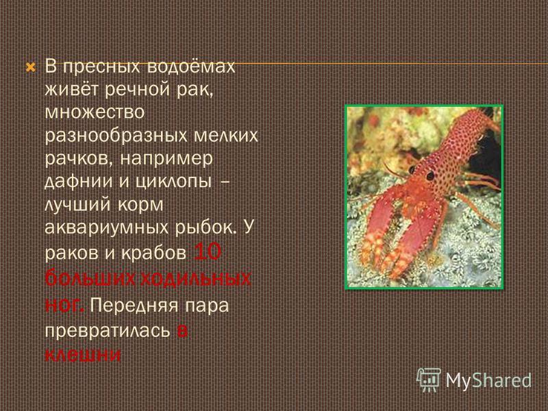 В пресных водоёмах живёт речной рак, множество разнообразных мелких рачков, например дафнии и циклопы – лучший корм аквариумных рыбок. У раков и крабов 10 больших ходильных ног. Передняя пара превратилась в клешни