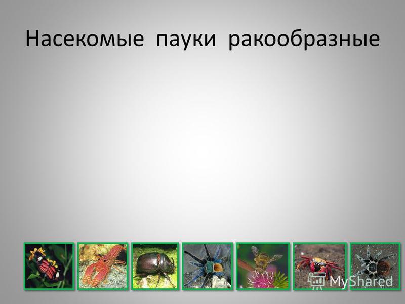 Насекомые пауки ракообразные