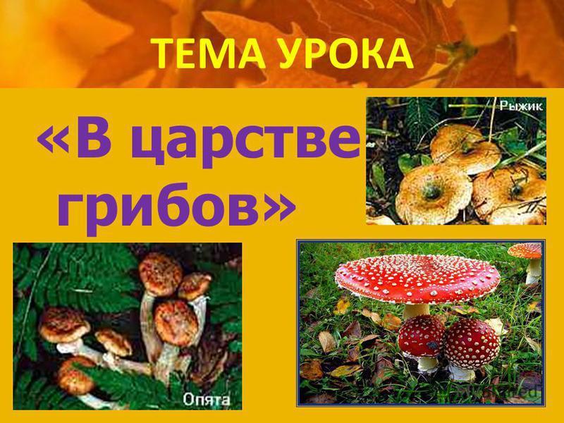 Презентация на тему в королевстве грибов