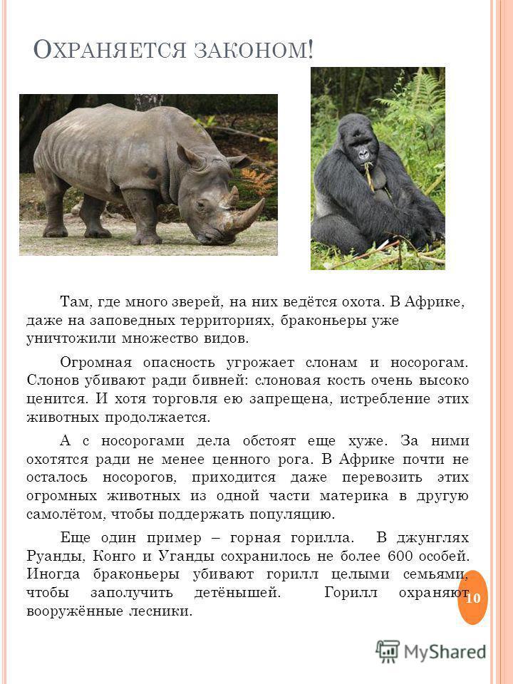 О ХРАНЯЕТСЯ ЗАКОНОМ ! Там, где много зверей, на них ведётся охота. В Африке, даже на заповедных территориях, браконьеры уже уничтожили множество видов. Огромная опасность угрожает слонам и носорогам. Слонов убивают ради бивней: слоновая кость очень в