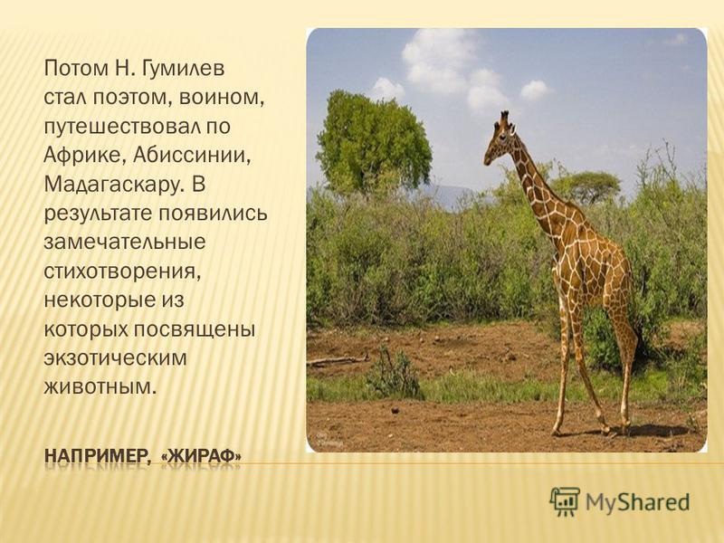 Потом Н. Гумилев стал поэтом, воином, путешествовал по Африке, Абиссинии, Мадагаскару. В результате появились замечательные стихотворения, некоторые из которых посвящены экзотическим животным.