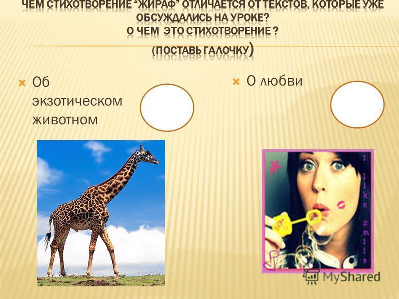 Об экзотическом животном О любви