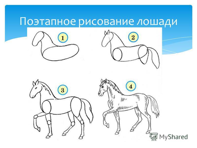 Поэтапное рисование лошади