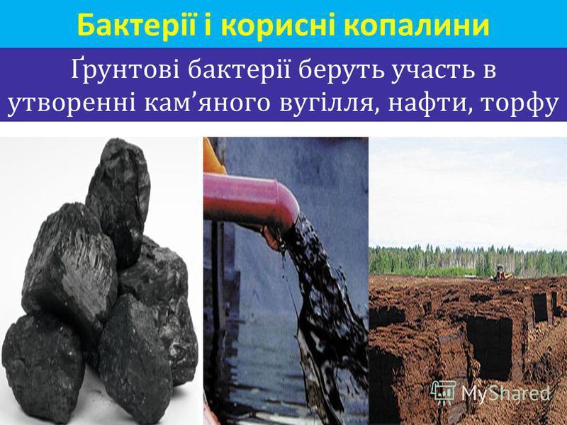 Ґрунтові бактерії беруть участь в утворенні камяного вугілля, нафти, торфу Бактерії і корисні копалини