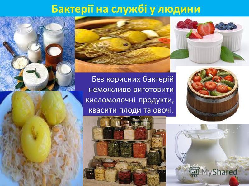 Без корисних бактерій неможливо виготовити кисломолочні продукти, квасити плоди та овочі. Бактерії на службі у людини